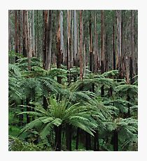 Fern Soldiers of the Forest  Photographic Print