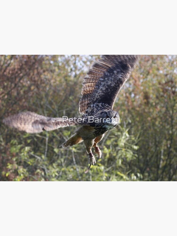 Eagle Owl by hartrockets