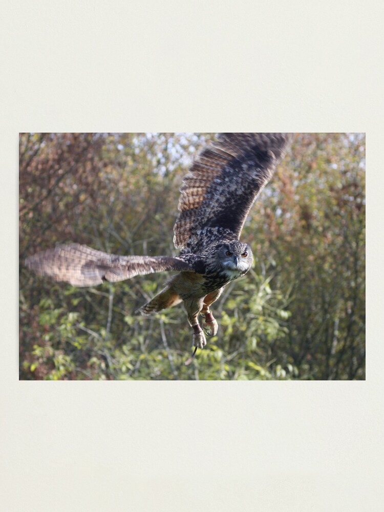 Alternate view of Eagle Owl Photographic Print