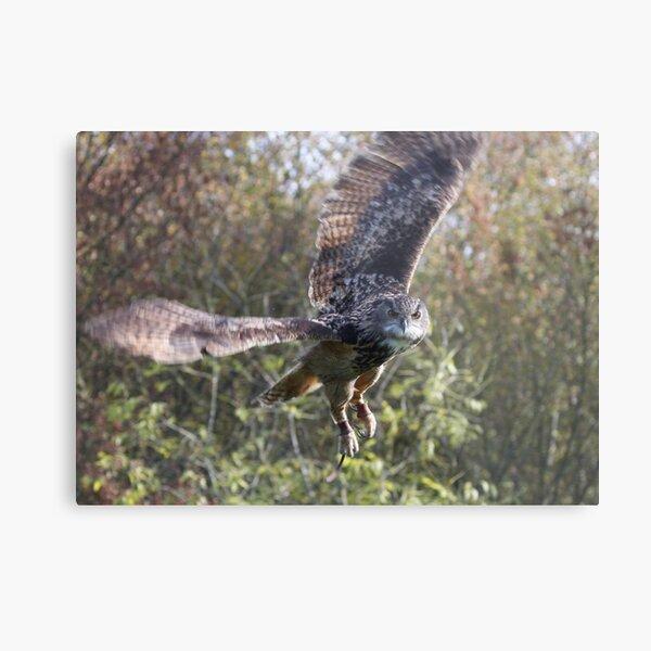 Hibou grand-duc Impression métallique