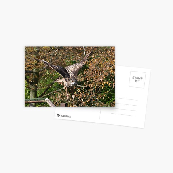 Eagle Owl 2 Postcard