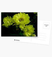 Amarillas ................................ Postcards