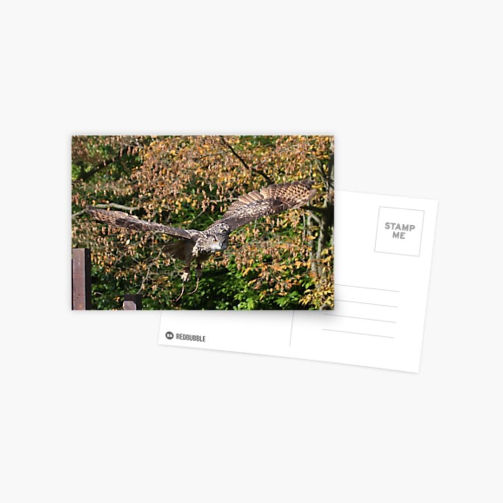 Eagle Owl 3 Postcard