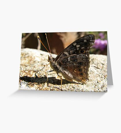 Butterfly ~ Empress Leilia Greeting Card