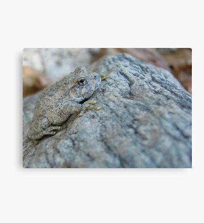 Canyon Treefrog Canvas Print