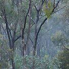 Let it rain by Roslyn Slater