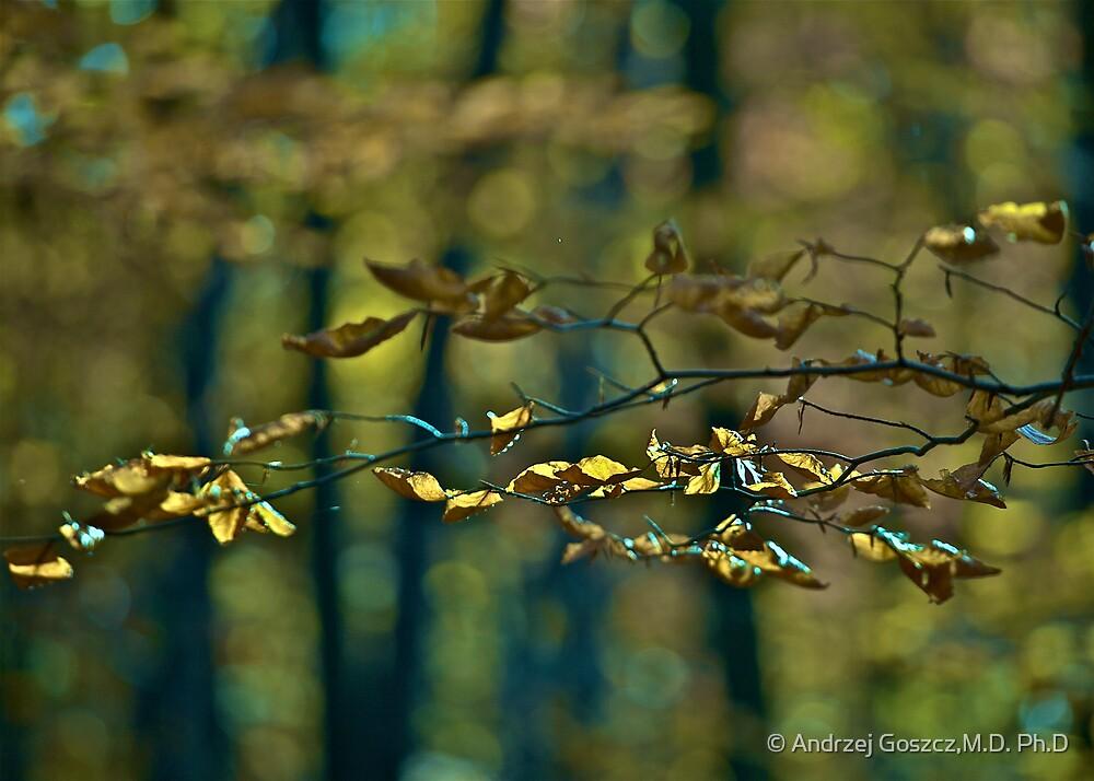 ♥ ♥ ♥ ♥ . Life Is Too Short .  by Brown Sugar . Favorites: 7 Views: 827  . i znowu mamy jesień ! by © Andrzej Goszcz,M.D. Ph.D