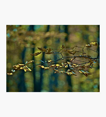 ♥ ♥ ♥ ♥ . Life Is Too Short .  by Brown Sugar . Favorites: 7 Views: 827  . i znowu mamy jesień ! Photographic Print