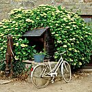Bicycle & Well, Brittany, France. by David A. L. Davies