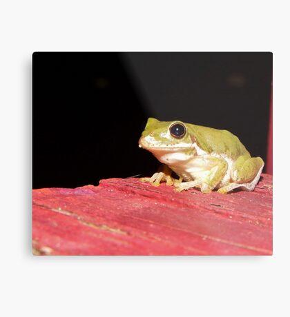 American green tree frog Metal Print