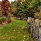 Brisk Autumn Day by Monica M. Scanlan