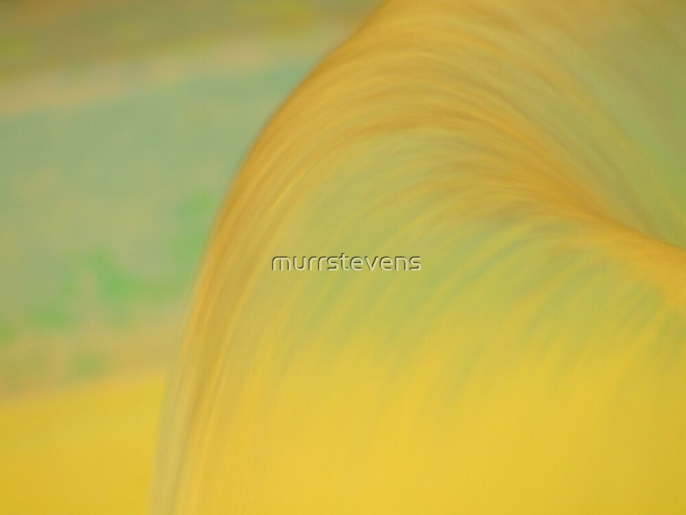 Yellow Flow by murrstevens