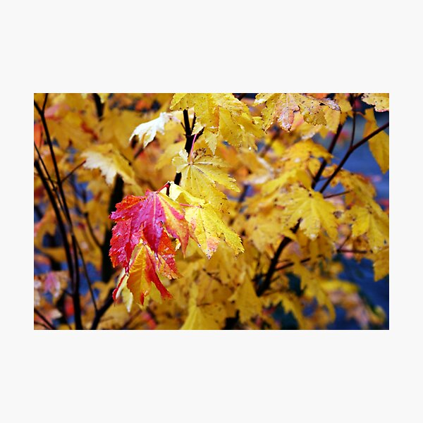 Colours Of Fall Photographic Print