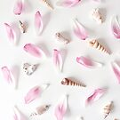 Shells and petals pastel flatlay by Zoe Power