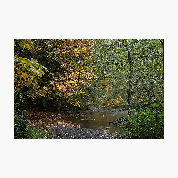 Fall in goldstream park Photographic Print