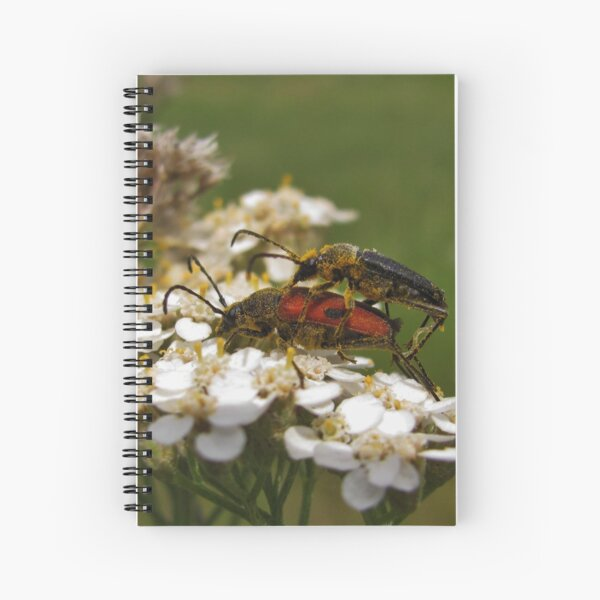 Longhorned beetles mating on Yarrow Spiral Notebook