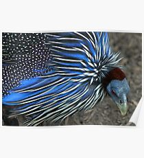A Blue Bird Of A Different Sort Poster
