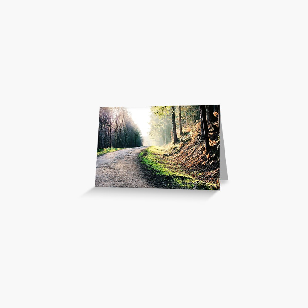 Haldon Forest in Devon Greeting Card