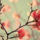 Dogwood flowers by Ingrid Beddoes