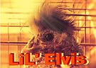 """""""LiL' Elvis""""... prints and products by Bob Hall©"""