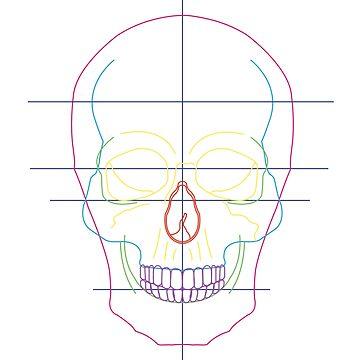 Rainbow Skull by carlie27