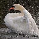Swan 1 by Alexa Pereira