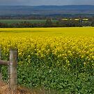 Golden Fields by Roslyn Slater