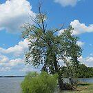 Summer at the Lake by Monnie Ryan