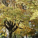 Autumnal by Stephanie Owen