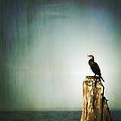 bird by Anthony Mancuso