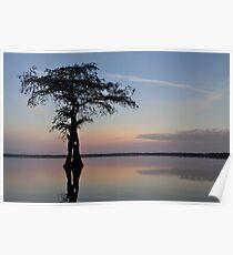 Cypress sunrise Poster