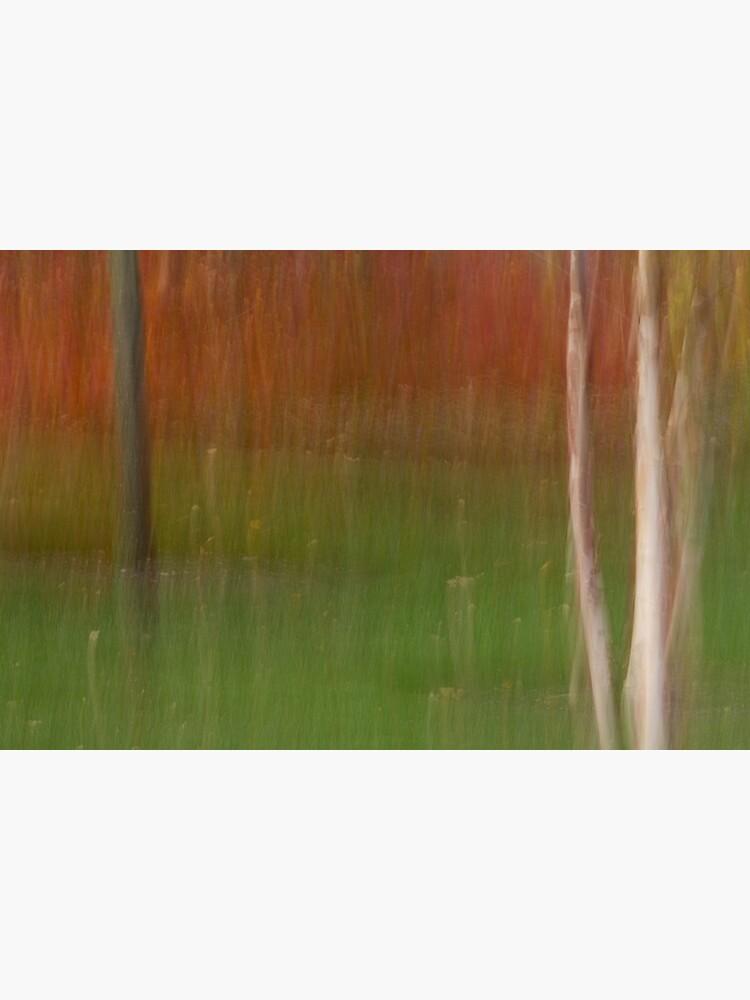 Autumn Saplings by LynnWiles