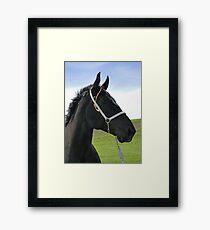 Classic Percheron Framed Print