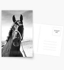 Percheron Posing Postcards