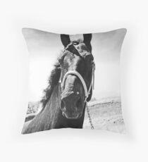 Percheron Posing Throw Pillow