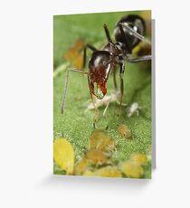 Symbiotic Relationships Greeting Card