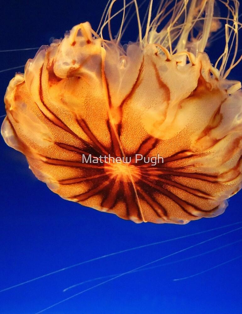Jelly Fish by Matthew Pugh
