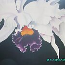Orchid by dinky