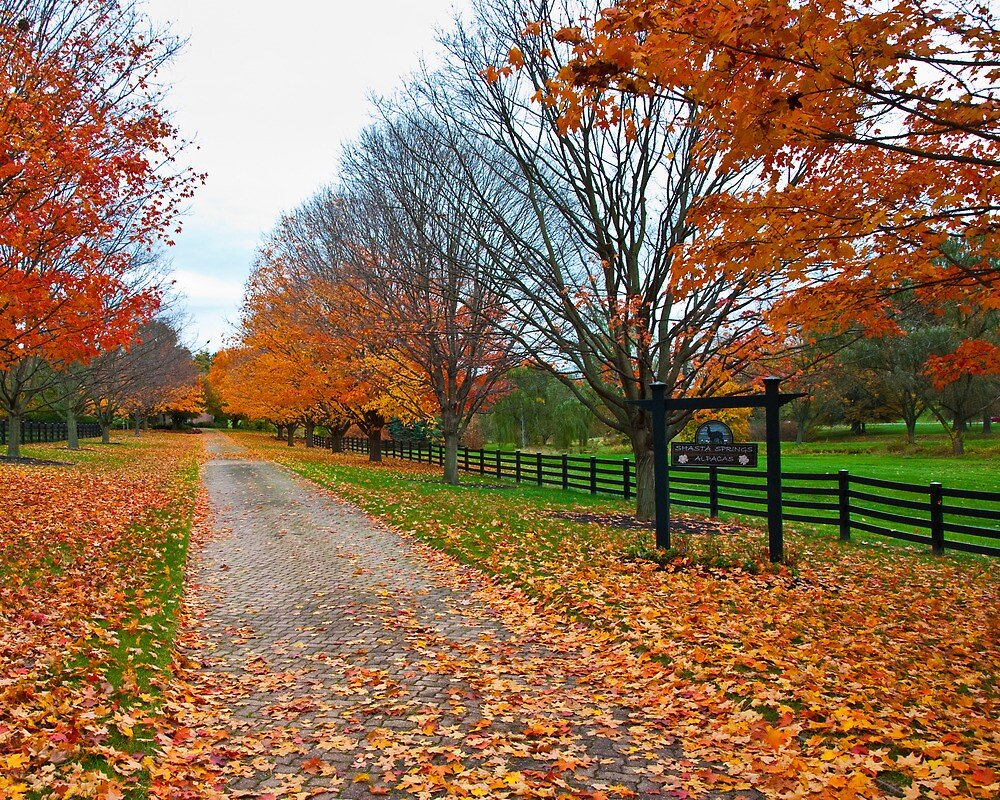 Fall Colors Line the Lane by ericseyes