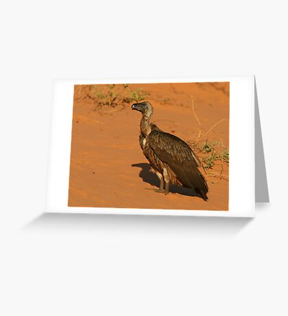 White-backed Vulture Greeting Card