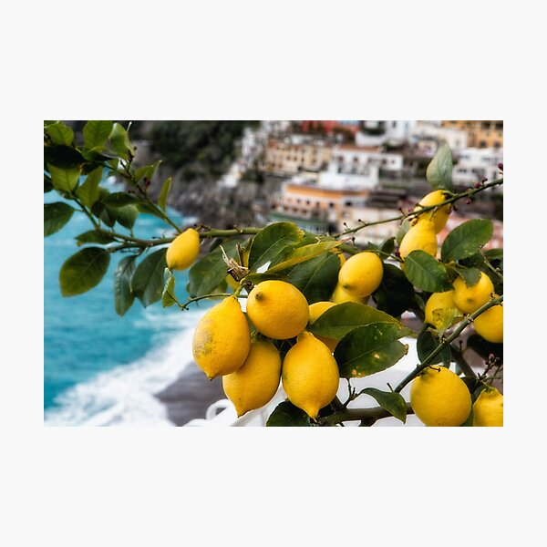 Amalfi Coast Lemon Tree  Photographic Print
