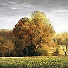 Autumn's Trees by Judi Taylor