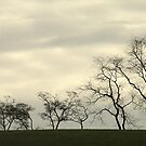 Waltzing Trees by RockyWalley