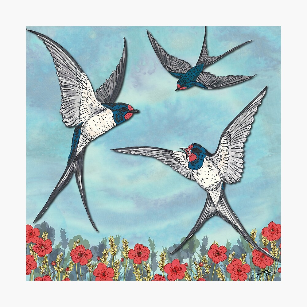 Summer Swallows Photographic Print