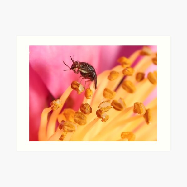 Tasty Pollen Art Print