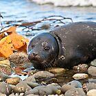 «Seal Pup» de Shawnna Taylor