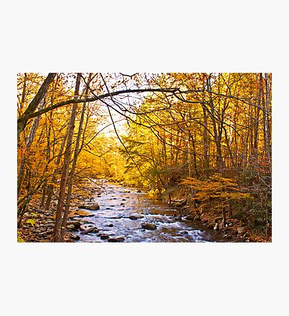 End of Fall! Photographic Print