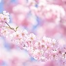 Cherry Blossom in dreamy soft pastels by Zoe Power