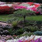 Rhodendron Gardens  by Andrew Clinkaberry