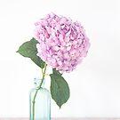 Hydrangea still life in pastel hues by Zoe Power